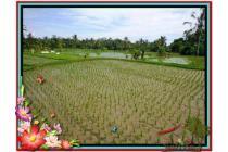 Prospek Investasi, 3.500 m2  View Sawah dan gunung di Ubud TJUB477