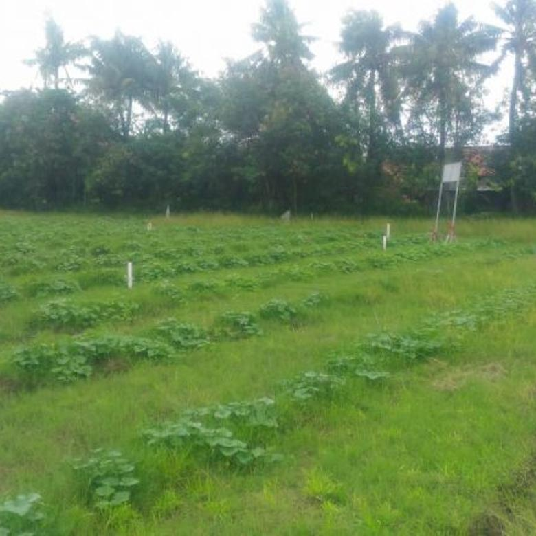 Tanah Kavling Suka Mekar Sukawangi Bekasi Utara DP Ringan
