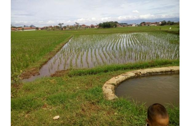 Tanah sawah produktip diSukamukti kataang lt.2800m2 15113163