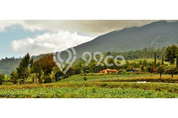 Investasi Masa Depan Tanah Kavling Murah di Puncak Jawa Barat - SHM 17794421