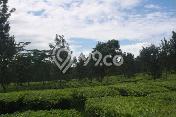 Investasi Masa Depan Tanah Kavling Murah di Puncak Jawa Barat - SHM 17794429