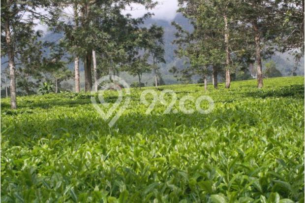 Investasi Masa Depan Tanah Kavling Murah di Puncak Jawa Barat - SHM 17794427