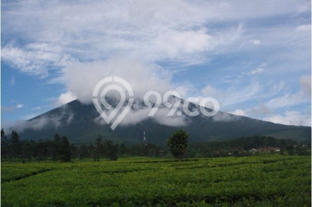 Investasi Masa Depan Tanah Kavling Murah di Puncak Jawa Barat - SHM 17794426
