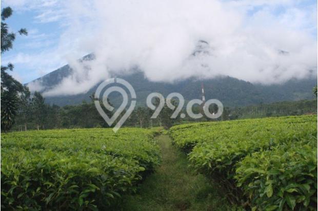 Investasi Masa Depan Tanah Kavling Murah di Puncak Jawa Barat - SHM 17794425