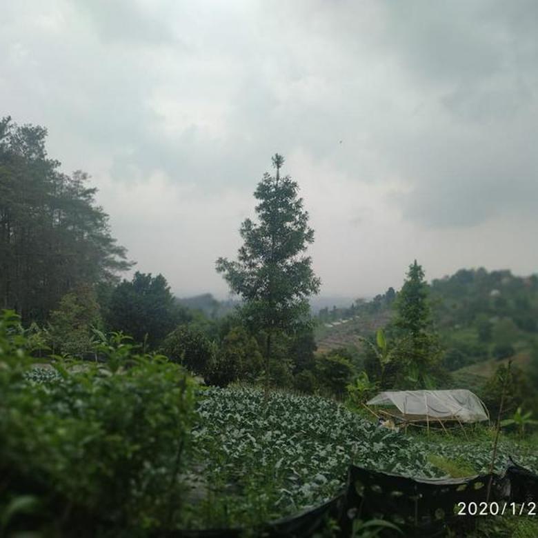 Tanah Pagersari Lembang Cocok untuk Villa..bersebelahan dengan hutan pinus Tahura