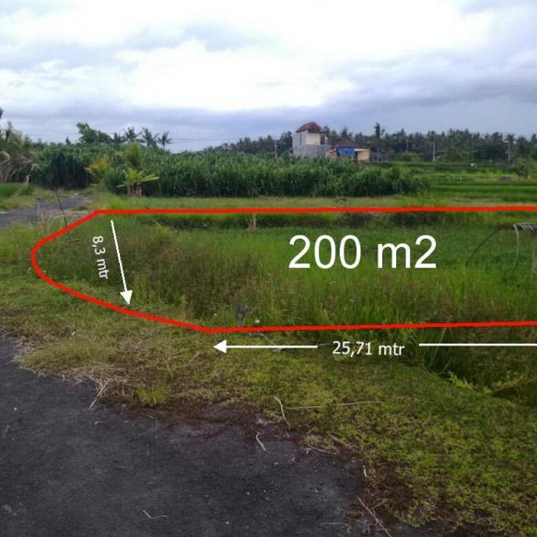 Tanah Kapling 2 are view sawah 170 mtr menuju pantai cucukan gianyar