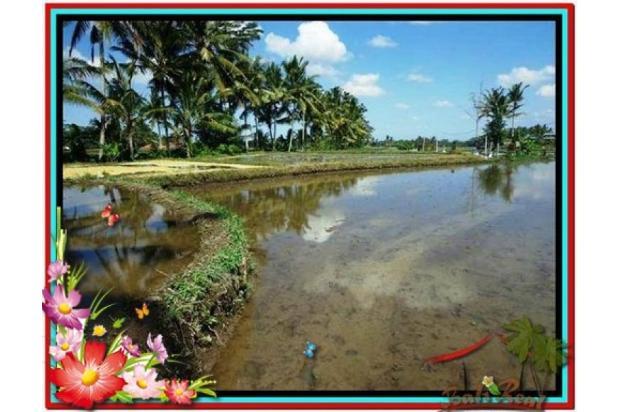 Investasi Properti, 1.000 m2  View Sawah di Sentral Ubud TJUB501  4292592