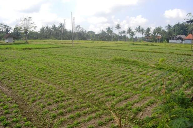 Rp3,85mily Tanah Dijual