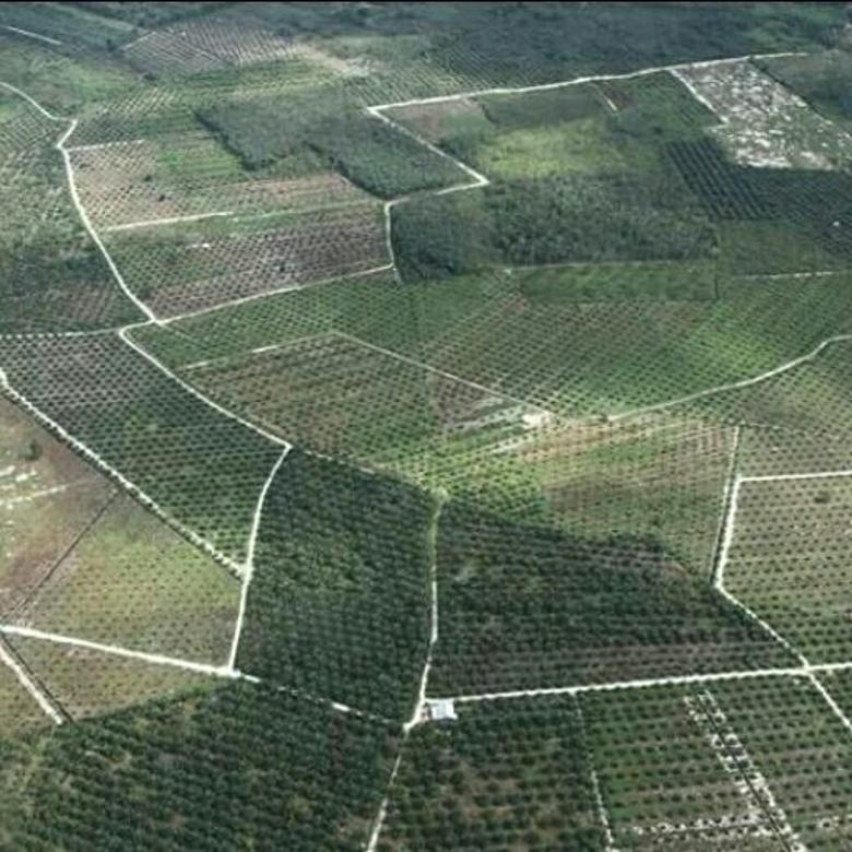Di jual lahan sawit di Riau