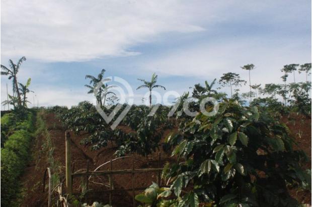 Investasi Kavling Villa Puncak Cipanas, Green Montana Village 16225632