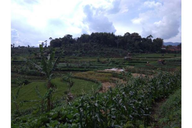 Beli tanah dapat Villa, Tanah murah di Ciwidey | Ru 14475436