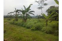 Tanah Industri, Paling Murah di Area Gunung Putri