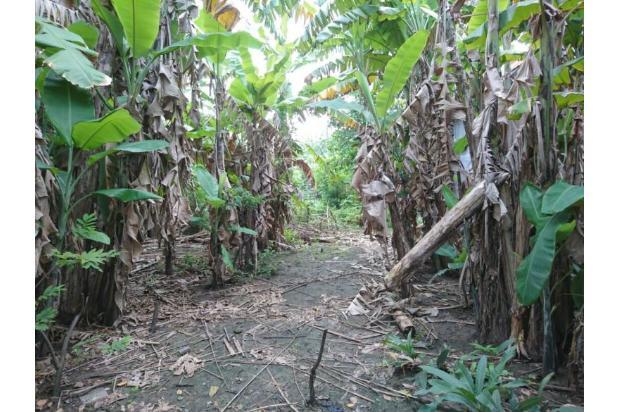 Tanah Raya Lontar Surabaya strategis cocok usaha atau gudang 15422099