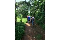 Tanah dijual di Bogor dekat Jonggol untuk kebun buah cocok buat Investasi