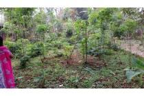 Tanah di Jual di Leuwiliang Bogor Cocok utk Investasi