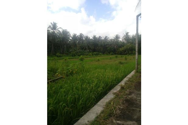 Investasi Tanah Strategis Dekat Calon Bandara Kulon Progo di Tawangsari, KP 15830254