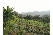 Tanah kebun murah banget di Punten Batu