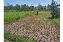 Tanah Murah 12 are di Desa Tenun sukarare Lombok Tengah