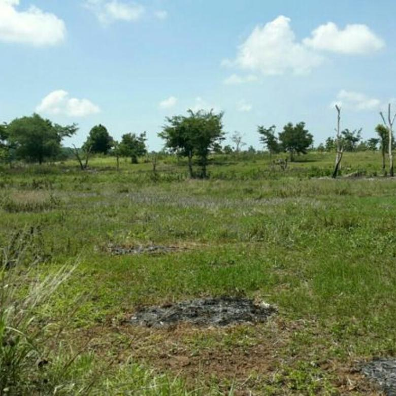 Tanah di fatukoa KUPANG NTT