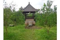 Dijual Tanah Jarang ada Mantap 5,600 m2 di Ubud Tegalalang UB609