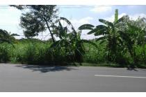 Tanah Disewakan BU Bebas Banjir di Jl.Raya Boboh Menganti Benowo Surabaya