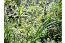 Dijual Tanah Bagus Strategis di Ubud Bali