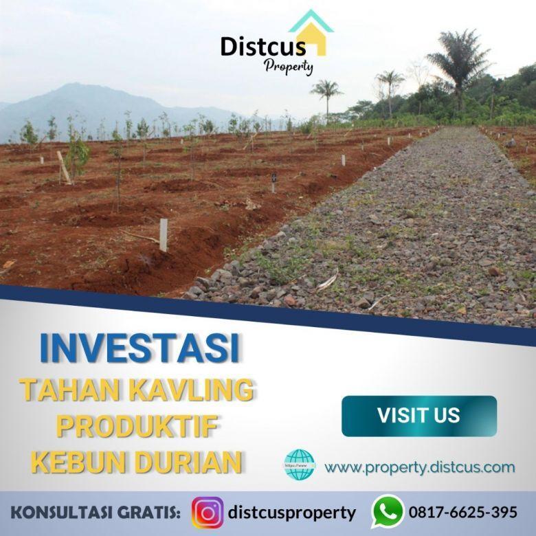 Investasi Kavling Tanah Produktif (Kebun Gaharu & Durian)