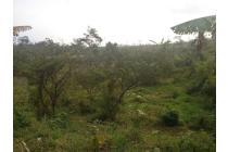 Dijual Tanah cocok untuk kavlingan dan kebun dekat sekolah Internasional