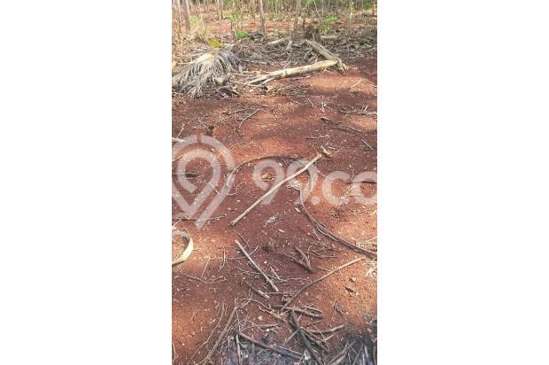 Tanah Prospek Gunungkidul 13698299