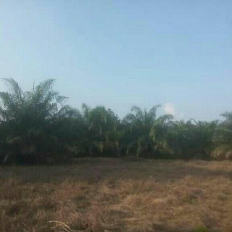 Di jual lahan sawit di sumatra selatan