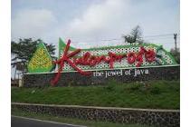 Kaveling Tanah Bendungan, Wates Kota, 7 Unit: Bukan Lokasi Pinggiran!