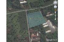 530 Ubin Murah Kebun Buah di Limpakuwus Baturaden Purwokerto