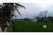 Lahan sawah aktif di Tenjolaya Bogor (prop615)
