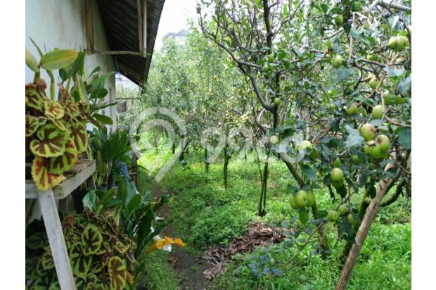 Rumah plus kebun apel murah di Junggo Bumiaji Batu 12750892