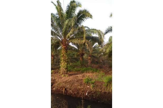 Rp675mily Tanah Dijual