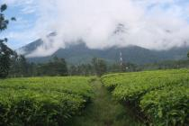 Tanah Kavling Murah di Cianjur Lokasi Diketinggian 1000 Mdpl