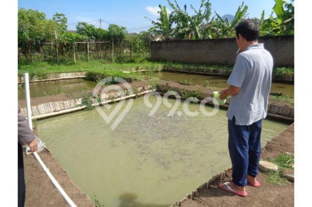 tanah murah bonus rumah & 17 kolam ikan aktif income 4jt/bln di bandung 7285793