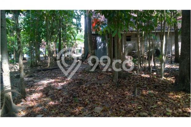 Tanah Dijual Bantul Murah, Tanah Pekarangan Cocok Untuk Hunian 12398583