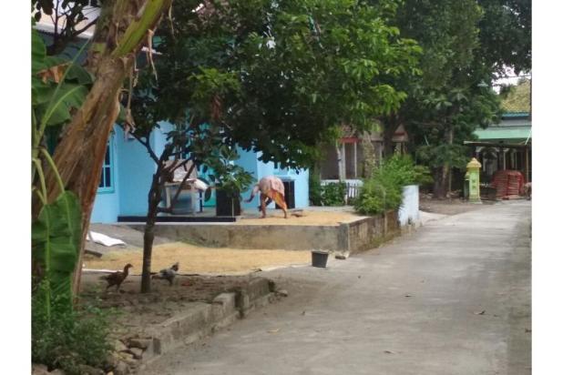 BEDA: Tanah Kaveling Site Plan Rapi Berbanjar, Petak Tanah Kampung Tidak 12900171