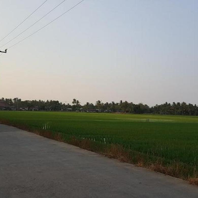 Tanah Sawah Sukatani Bekasi Dekat Pertamina Luas 1,2 Ha Rp 500 Ribu/ Meter
