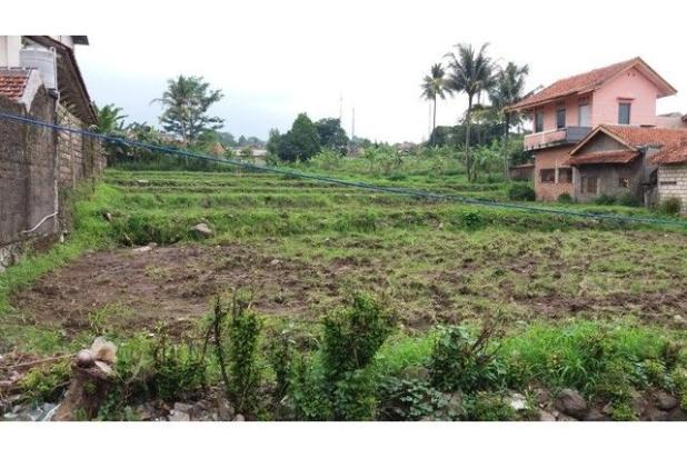 Lahan Gang Sawah, Ciapus Bogor 7857419