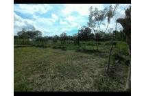 Tanah ISTIMEWA 2,8 hektar Dalam Kota jember Sudah tembok keliling