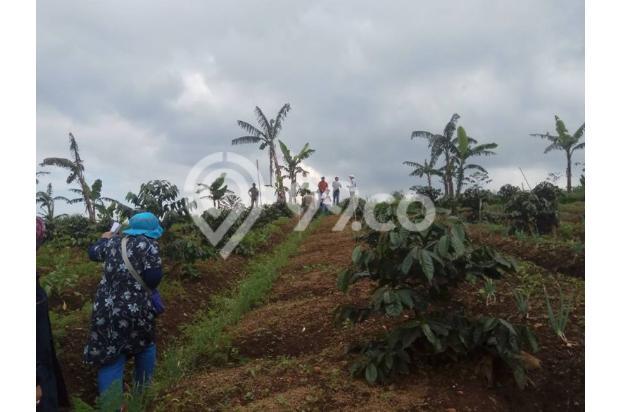 Investasi Masa Depan Tanah Kavling di Puncak Jawa Barat 17307092