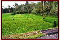 Murah Cantik Tanah 9.400 m2 di Ubud Payangan #526