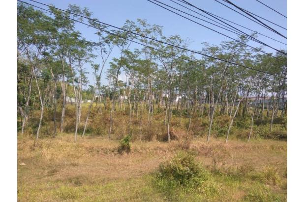 Rp8,1mily Tanah Dijual