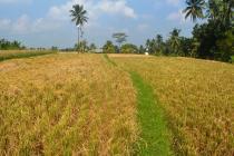 Tanah Prospek View Sawah lingkungan Villa di Ubud Tegalalang LUBD669