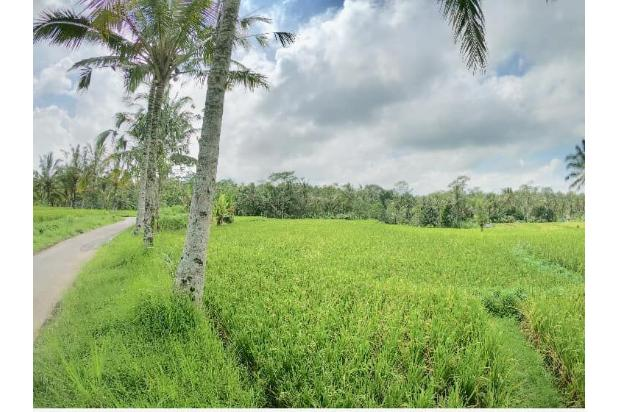 Rp264mily Tanah Dijual