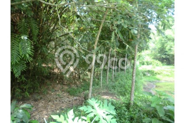 Tanah Unik Dekat Dengan Sungai Kecil, Bisa Papasan Di Kalitirto Berbah 8057890