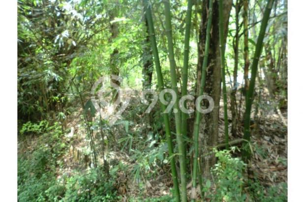 Tanah Unik Dekat Dengan Sungai Kecil, Bisa Papasan Di Kalitirto Berbah 8057888
