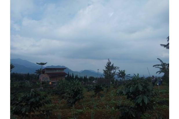 Tanah Kavling Murah di Kawasan Kebun Teh Gedeh Cipanas - SHM 17795373